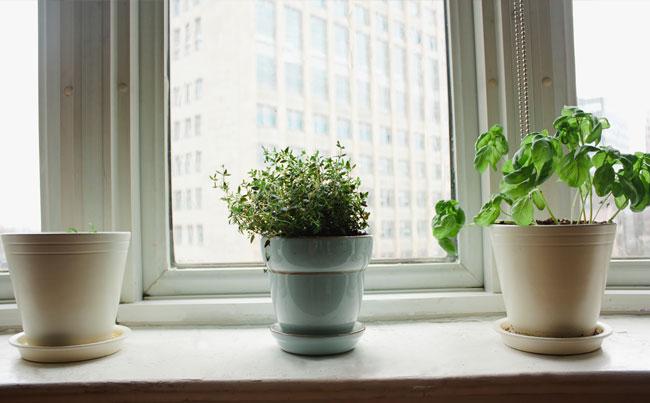 TINY URBAN WINDOW GARDEN